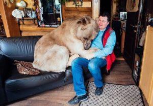 クマと戯れる男性
