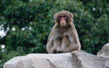猿まね 歯茎 マッサージ