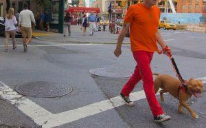 オレンジ色の洋服を着て犬の散歩をするおじさん