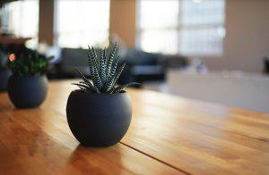 テーブルの上の観葉植物