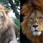 人間の本来の生命力を取り戻せば薄毛も改善していきます